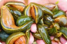 水蛭养殖技术介绍