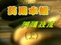 宽体金线蛭的养殖方法 (819播放)