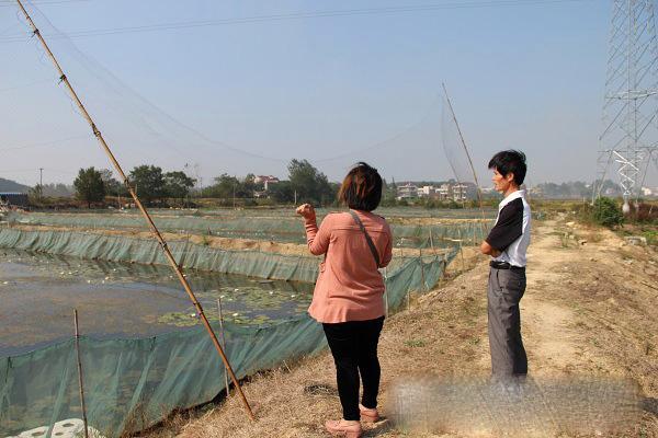 水蛭养殖基地现场图