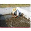 水蛭 水蛭苗 宽体金线水蛭种苗