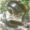 收购野生水蛭种苗