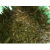 大量供应宽体 金线 水蛭 种苗 青年苗[质量保证,价廉物美]