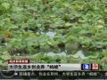 荆州大学生水蛭养殖 (3播放)