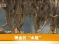 养水蛭 (193播放)