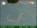 湖北荆门水蛭养殖创业 (3播放)