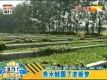 湖北荆州养水蛭圆了老板梦 (3播放)