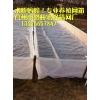 加密 水蛭蚂蟥泥鳅水产养殖网/孵化网/聚乙烯网