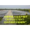 60目加密 水蛭蚂蟥网箱水产养殖网/孵化网/聚乙烯网