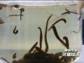 水蛭素引领云南生物制药发展 (3播放)
