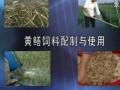 温室黄鳝养殖技术 (47播放)
