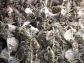 土元可以产几次卵,徐州土元养殖技术视频 (49播放)