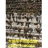 大量吊干水蛭出售:13907248605,湖北地区~~