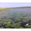 水蛭养殖基地/水蛭养殖-东北水蛭养殖基地