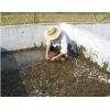 供应水蛭鲜货、干货、种苗