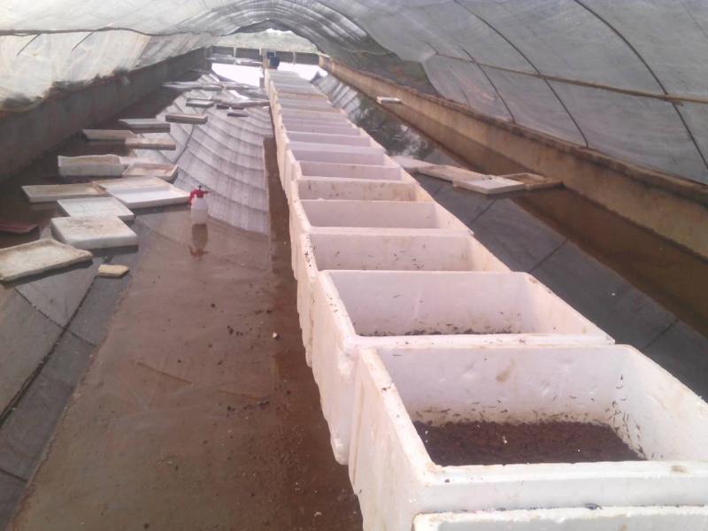 温室孵化1