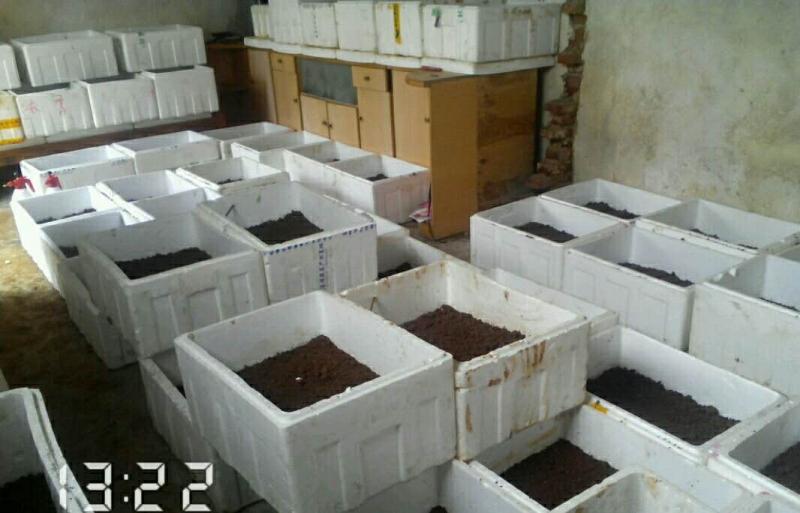 温室孵化4