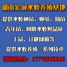 湖南澧县宏诚水蛭养殖专业合作社