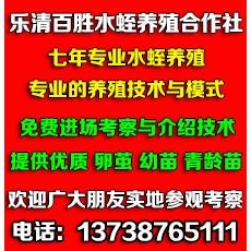 乐清市百胜水蛭养殖合作社