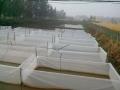 水蛭养殖基地展示