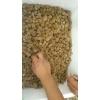 优质水蛭卵茧提供