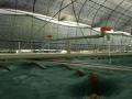水蛭养殖基地展示 (4)
