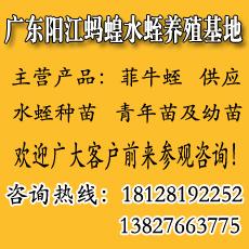 广东蚂蟥(水蛭)养殖基地