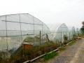 大棚水蛭养殖模式基地中心