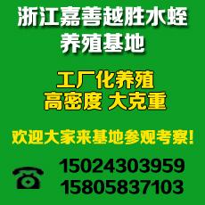 浙江嘉善越胜水蛭养殖基地
