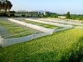 水泥池养殖基地展示 (7)
