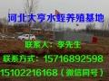 河北大亨水蛭养殖基地展示 (2)