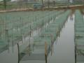 浙江温岭市温峤佰君丝网厂:填充塑料浮球的重要性