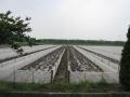 浙江温岭市温峤福梅网布加工厂——水蛭网箱养殖的日常管理