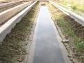 水蛭养殖塘清塘的必要性——池塘底泥的危害及处理方法