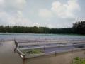 水蛭养殖场的选择需要考虑到哪几点?