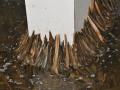 为什么水蛭脱皮会导致死亡?该如何预防呢?