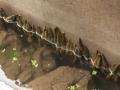 水蛭养殖池的消毒处理技术