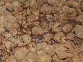 水蛭的人工繁殖技术大剖析