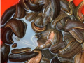 水蛭人工养殖致富办法