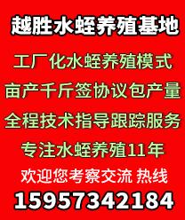 浙江越胜水蛭养殖基地