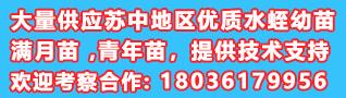 中国水蛭网供苗