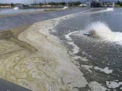 水蛭养殖|池塘出现倒藻要如何处理?