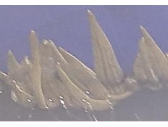 案例分享|水蛭白天扎堆趴边不下水,也不吃食