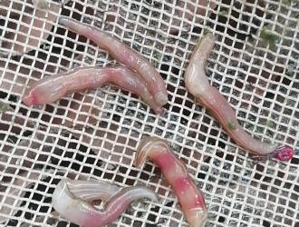 水蛭肠炎病的诊断与治疗案例分享