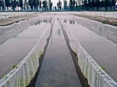 水蛭养殖池塘需要清塘消毒吗?该怎么处理?