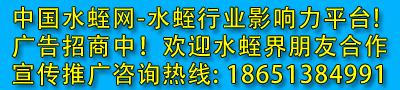 中国水蛭网广告位